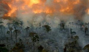 Burning_rainforest-001a