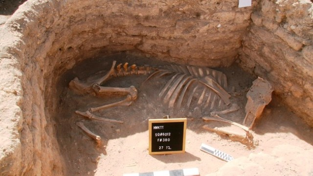 3400 år - Arkeologane vil finne svar på kvifor skjelettet til ein okse eller ei kyr vart funne gravlagd i eit rom i eit av husa.